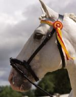 Ludomar de-Luxe  serreta with plain or presentation browband